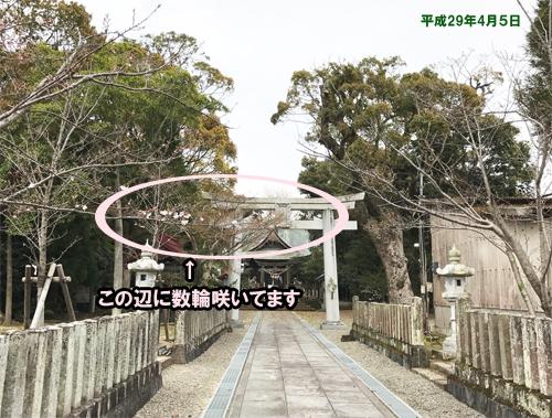 0405-1桜